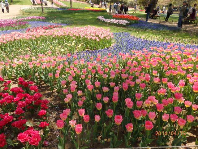 「春爛漫2」