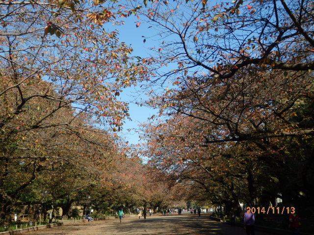 「上野の紅葉」