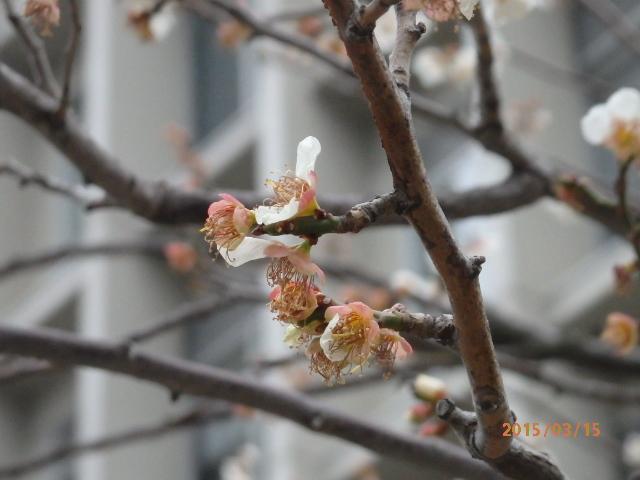 「春と花」